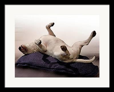 Terrier Mixed Media Framed Prints