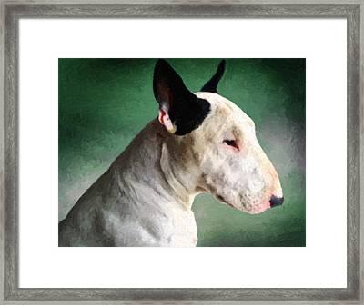 Bull Terrier On Green Framed Print by Michael Tompsett