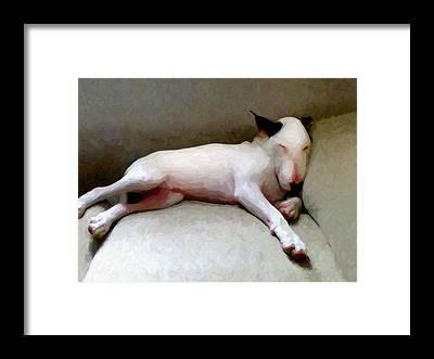 English Bull Dog Framed Prints