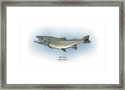 Bull Trout Framed Print by Ralph Martens