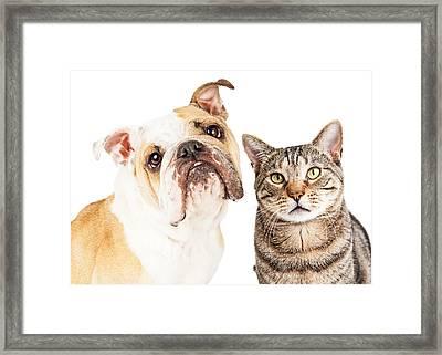 Bulldog And Tabby Cat Close-up Framed Print