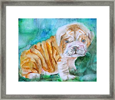 Framed Print featuring the painting Bulldog Cub  - Watercolor Portrait by Fabrizio Cassetta