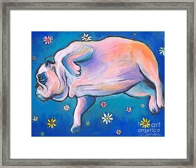 Bulldog Dreams Framed Print by Svetlana Novikova