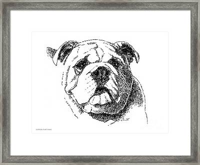 Bulldog-portrait-drawing Framed Print