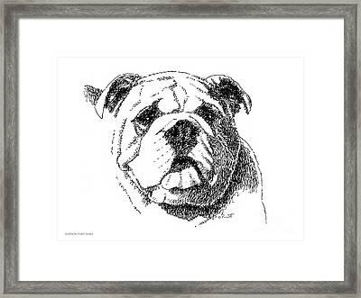 Bulldog-portrait-drawing Framed Print by Gordon Punt