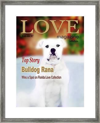 Bulldog Rana Poster 8 Framed Print