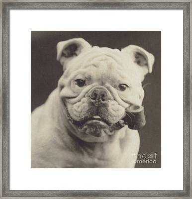 Bulldog Smoking A Pipe Framed Print