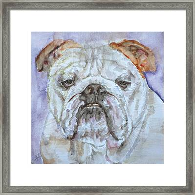 Framed Print featuring the painting Bulldog - Watercolor Portrait.5 by Fabrizio Cassetta