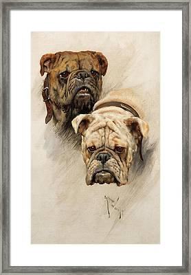 Bulldogs Framed Print