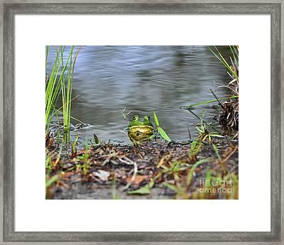 Bullfrog Blending Framed Print