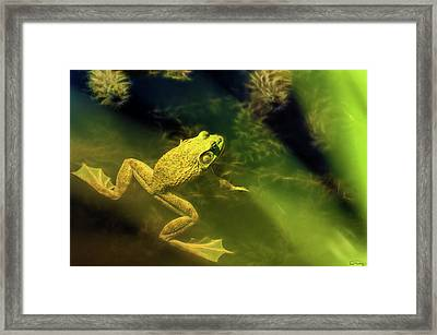 Bullfrog In A Pond Framed Print