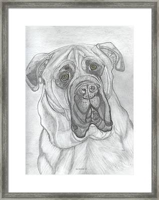 Bullmastiff Framed Print
