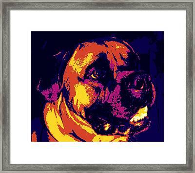 Bullmastiff  Framed Print by Sheri Buchheit