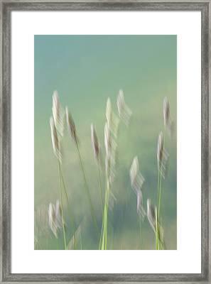 Framed Print featuring the photograph Bullrush Batons by Deborah Hughes