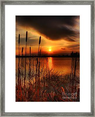 Bullrush Sunset Framed Print by Kim Shatwell-Irishphotographer