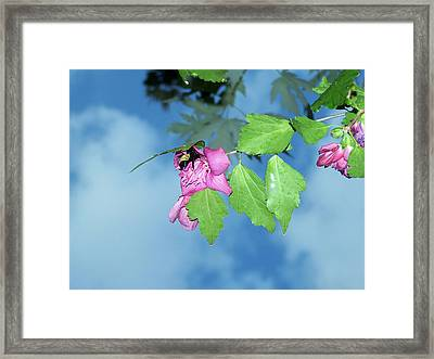 Bumble Bee Framed Print by Evelyn Patrick