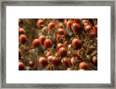 Bumble Bee Heaven Framed Print