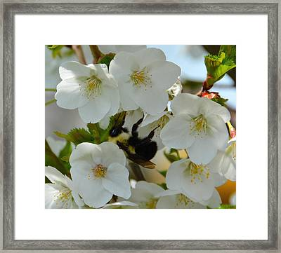 Bumble Bee In Hiding Framed Print