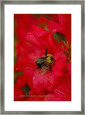 Bumble Bee In Red Framed Print by Sheila June Denson