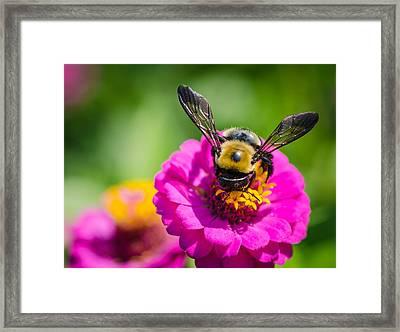 Bumble Bee Macro Image Framed Print