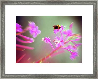 Bumble Bee On Wildflower Framed Print