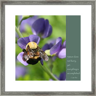 Bumble Bee With Zen Quote Framed Print by Heidi Hermes