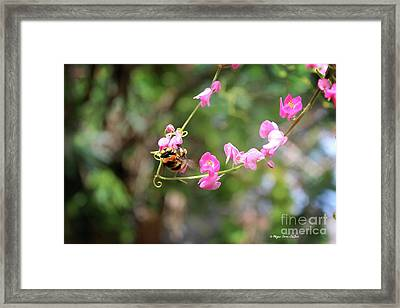 Framed Print featuring the photograph Bumble Bee1 by Megan Dirsa-DuBois