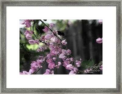 Framed Print featuring the photograph Bumble by Megan Dirsa-DuBois