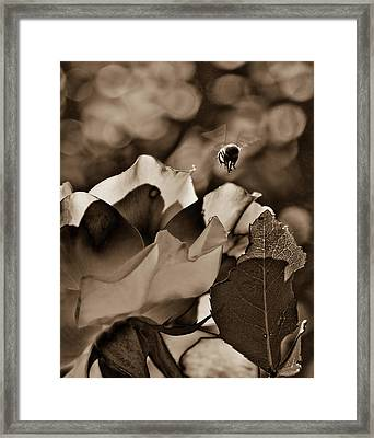 Bumble Framed Print by Monroe Snook