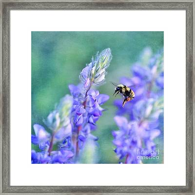 Bumblebee And Lupine Framed Print by Priska Wettstein