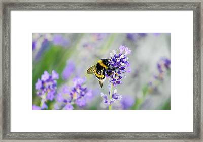 Framed Print featuring the photograph Bumblebee by Bee-Bee Deigner