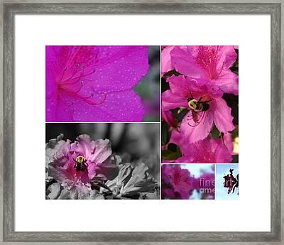 Bumblebee Bonanza Framed Print