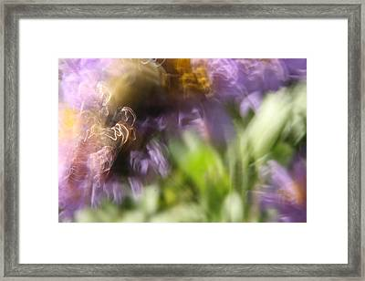 Bumblebee Dance Framed Print