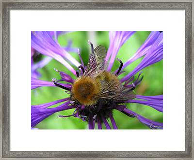 Bumblebee In Blue Framed Print