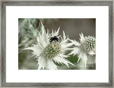 Bumblebee On Thistle Flower Framed Print by Victoria Harrington
