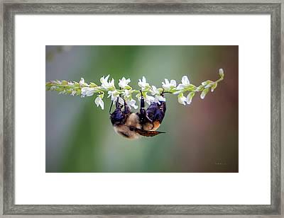 Bumblebee On Wildflower Framed Print