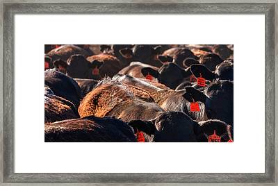 Framed Print featuring the photograph Bumper To Bumper by Quality HDR Photography