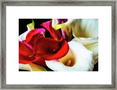 Bunch Of Beautiful Calla Lilies Framed Print by Garry Gay