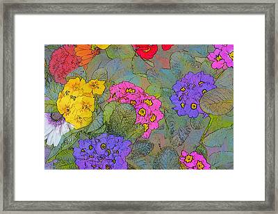 Bunch Of Colorful Primroses Framed Print