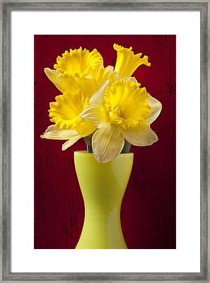 Bunch Of Daffodils Framed Print by Garry Gay