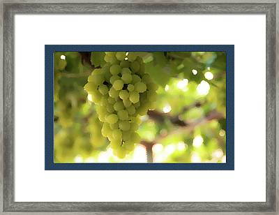 Bunch Of Grapes Framed Print by Shay Weiss