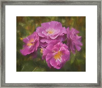 Bunch Of Purple Roses Framed Print