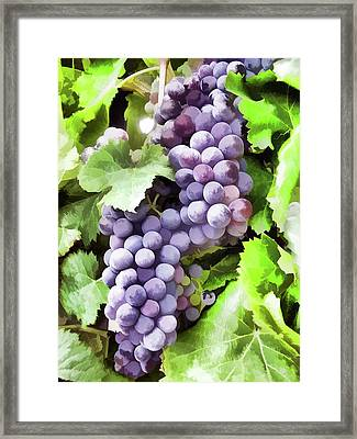 Bunch Of Red Grapes On The Vine With Green Leaves Framed Print by Lanjee Chee