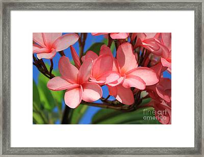 Framed Print featuring the photograph Bunches Of Pink Plumerias by Edward R Wisell