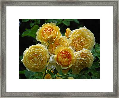 Bundle Of Joy Framed Print by Juergen Roth