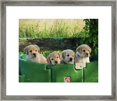 Bundles Of Joy - Labrador Art Framed Print