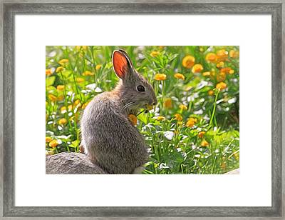 Bunny Brunch Framed Print by Donna Kennedy