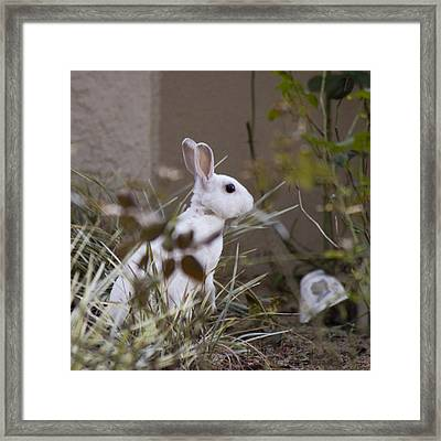 Bunny In The Garden Framed Print by Anthony Towers
