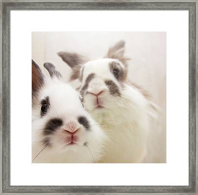 Bunny Pals Framed Print by Jenni Holma