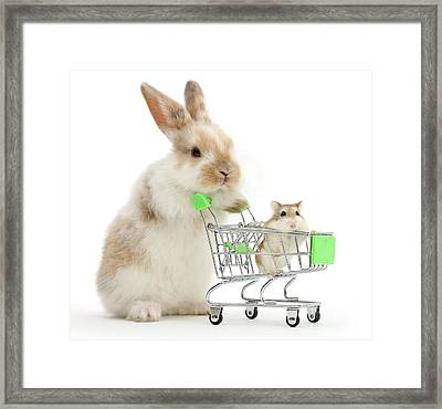 Bunny Shopping Framed Print